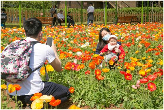 春花二月开岭南,暖风熏得游人醉,广东景区做好花景观发展赏花经济