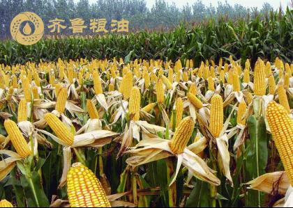 基于粮食大省的实际情况 齐鲁粮油公共品牌迎来了新的发展模式