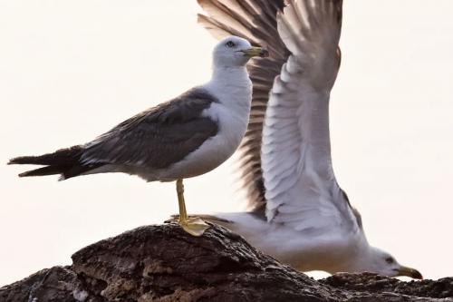 """行摄生态中国 佳能助力""""循翼万里海疆""""海岸生态研究保护活动"""