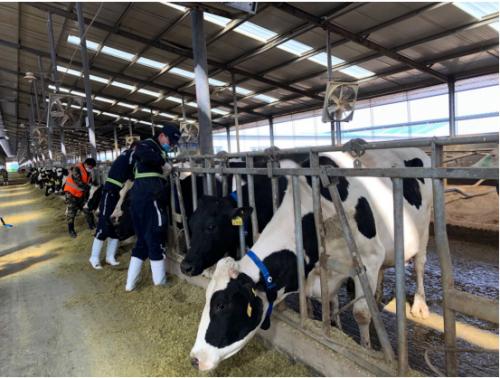 蒙牛2020年报:重构乳业数字化生态!蒙牛启动全链路数智化转型