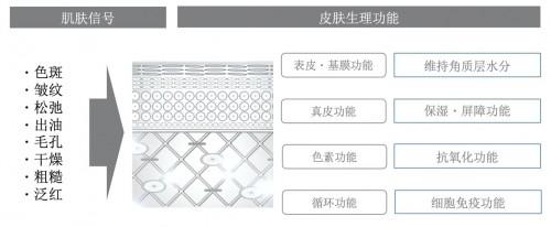 """""""THE GINZA御银座""""品牌焕新 全新升级独特复合成分,打造臻泽健康美肌"""
