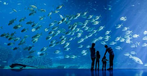 """珍惜水、爱护水,海洋乐园守护""""海洋"""""""