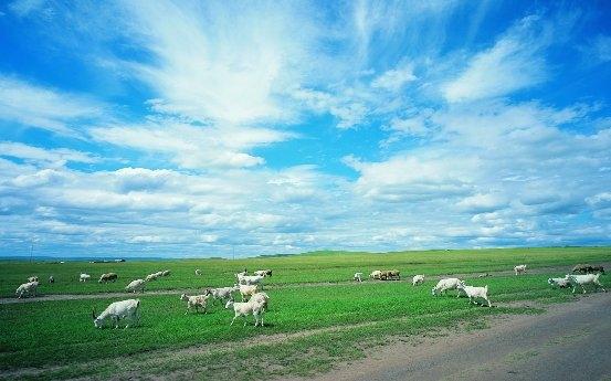 卓牧乳业:实力出圈,打造高品质的精选纯羊奶