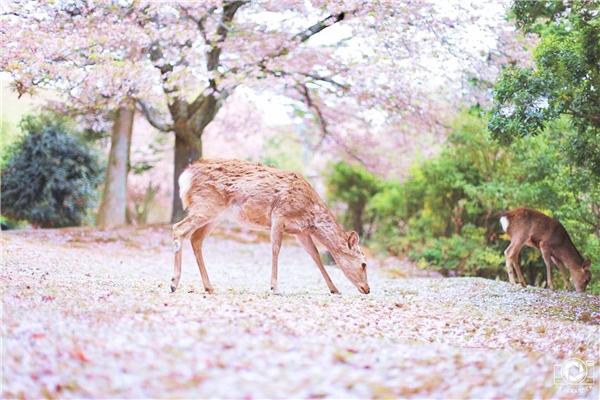 易信春光摄影大赛结束,这里有些关于春天的美