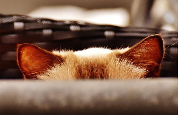 新兴猫粮品牌如何快速突围?弯道超车的尤佳猫王