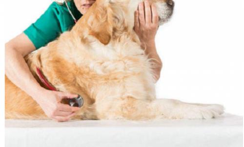 萌邦宠物首亮相 积极探索互联网+宠物健康服务新形态