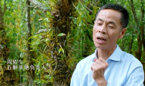 """植物医生:100年前西方""""植物猎人""""追寻的高山仙草"""