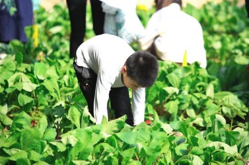 汇源Openday媒体行:领略生态农业别样风光