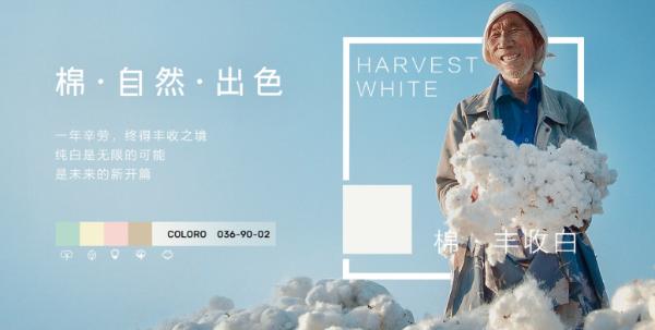 """全棉时代联合COLORO®首次发布""""棉""""主题色号,演绎棉的本真之色"""