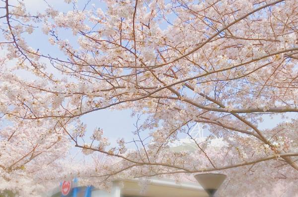 樱醺氛围感up 浪漫治愈