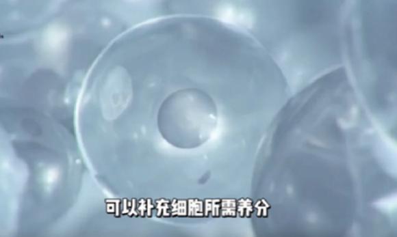 """植物医生:拥有3000多年入药史的""""东方人的长寿草""""积雪草"""