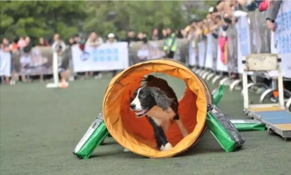 五一假期,北京宠物嘉年华-宠物运动会,萌宠赛事解析