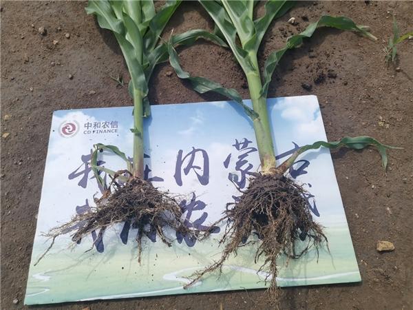 减肥4500吨,中和农信助力推进农业低碳循环发展