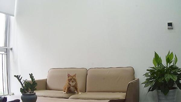 神了!这款用灯光充电的AI摄像头拍下了一张猫片!