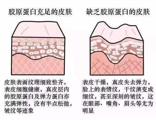 新西特优葛瑞丝胶原蛋白调制乳粉,保持青春的密码
