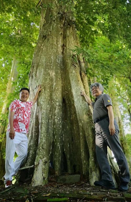 """全球首个千年古树康养综合体""""胎动""""大湾区"""