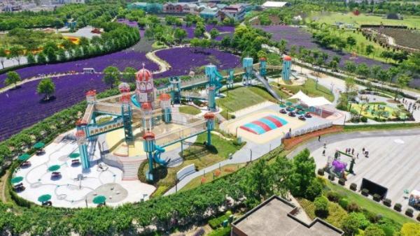 """""""紫""""愿你快乐!第五届上海薰衣草节来了!"""