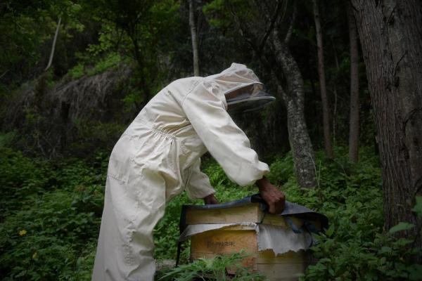 等蜂来斩获国际顶级美味大奖,中国蜂蜜获国际认可