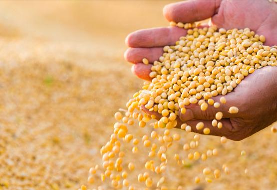 永和食品林建雄:追求卓越,从精选每一粒大豆开始