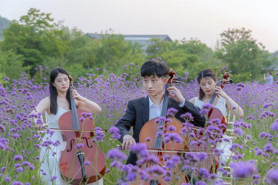 无锡拈花湾百人花海大提琴演绎视听盛宴