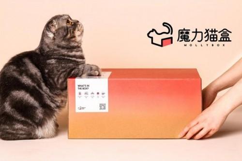 魔力猫盒,成就年轻人的另一种治愈
