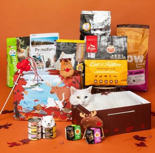 从物质到情感满足,魔力猫盒助力年轻人的便捷养宠生活