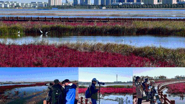 """2021年度RICS中国奖揭晓 岭南股份旗下岭南设计成""""黑马"""""""