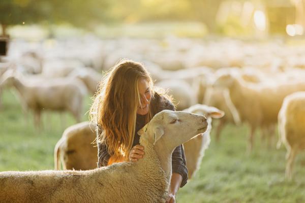 Spring Sheep婴儿绵羊奶粉闪耀世界舞台,斩获世界乳业创新大奖领跑世界乳业