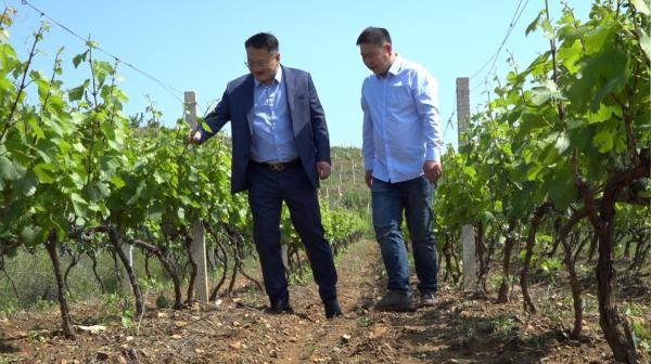 烟台鸥酩雅创始人张程茗:葡萄酒行业的新风向,用品质向世人传达东方之雅的时尚情怀