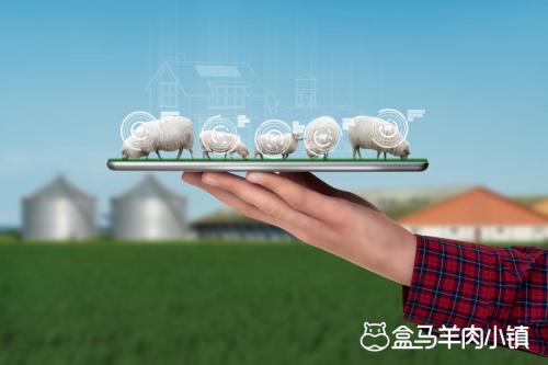 草原领头羊携手盒马助力盒马羊肉小镇