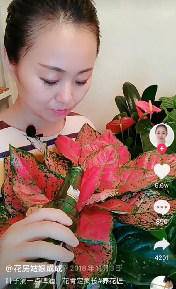 """41岁妈妈在抖音电商养花创业,""""富知计划""""助力花卉绿植被看见和获得"""