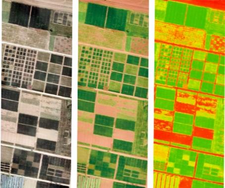 百年恰是风华茂   以数字转型之火,燎中华农耕大地