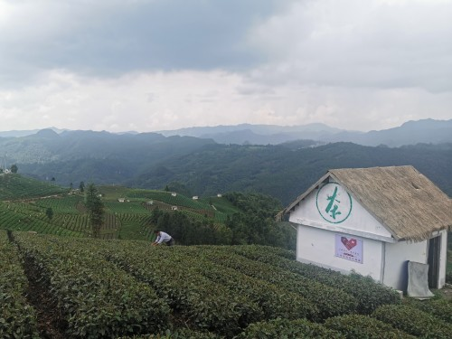 助力黔货出山 贵茶名品起航仪式在贵州贵定举行