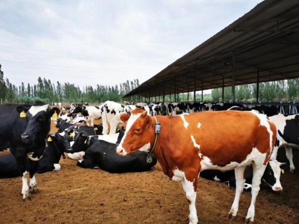 全民养牛App,响应共同富裕政策,致力成为经典案例