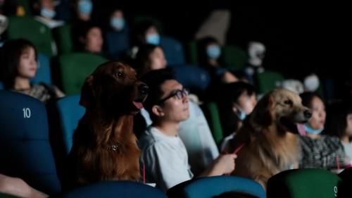 《忠犬流浪记》试映口碑爆了 一半观众哭成泪人