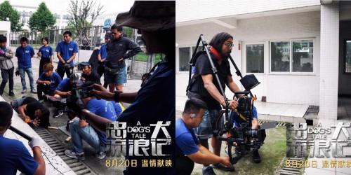 《忠犬流浪记》今日上映 四大看点打造中国版忠犬八公