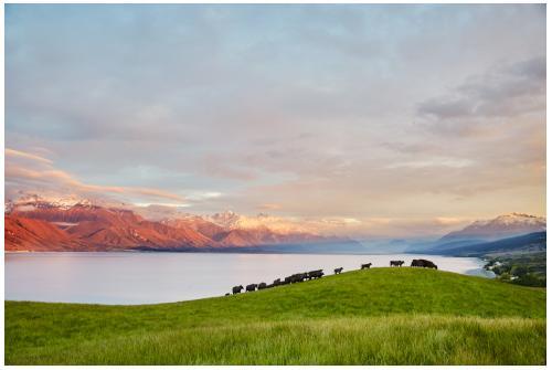 """南航与新西兰贸发局合作,推出""""南航关爱 新心相伴""""服务"""