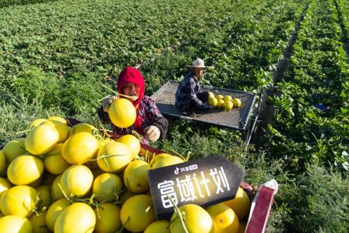 大学毕业当农民,90后甘肃民勤小伙在抖音电商帮家乡卖瓜