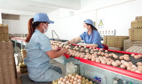 京东联合蛋类头部品牌德青源独家首发低醇鸡蛋 推动农产品产销正循环