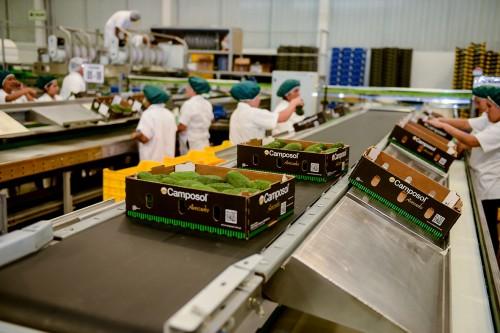 如何挑选一颗高质量的牛油果?