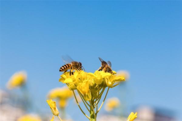 美国4岁小女孩发现罕见无刺蜜蜂 震惊整个昆虫学界