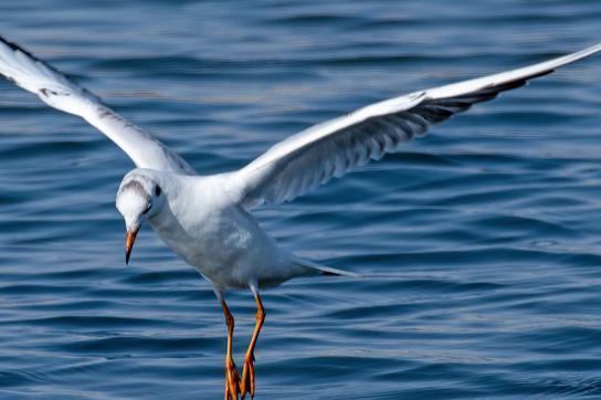 距离不是问题!陆地鸟类也能飞行数千公里跨越大洋