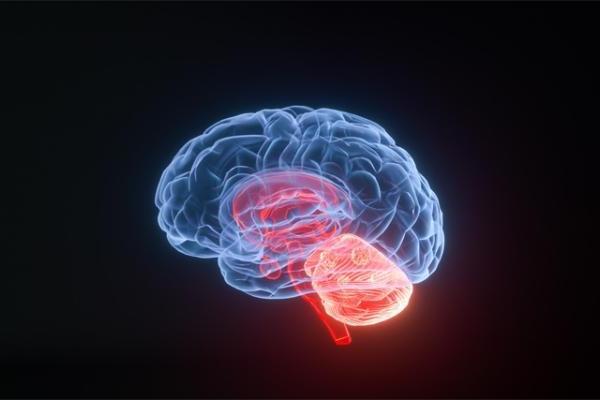人工智能可帮助确定神经刺激的大脑区域,有望解决相关脑部疾病