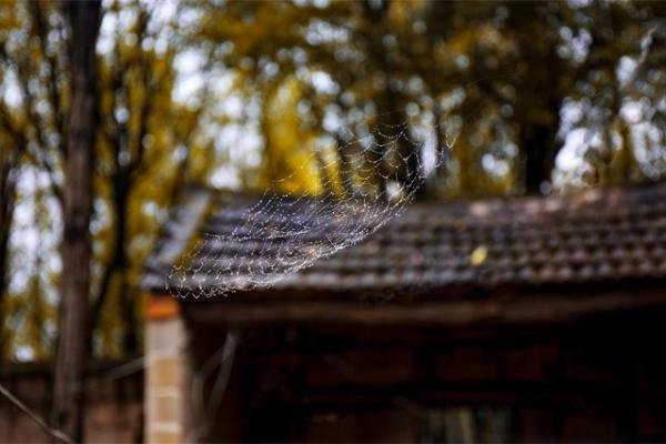 太害怕蜘蛛?新开发的APP可帮助减缓对蜘蛛的恐惧症