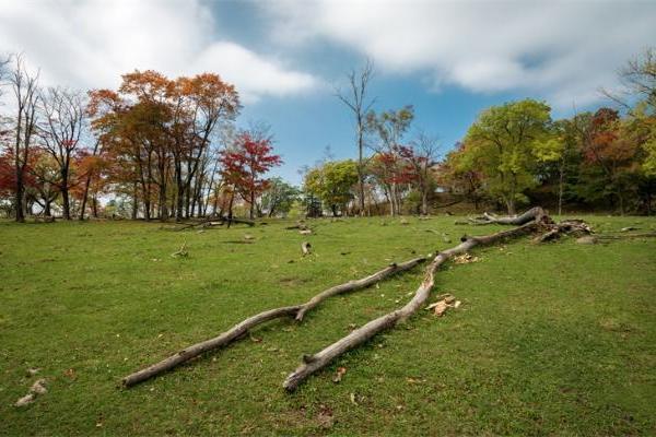 《自然》:枯木每年释放10.9千兆吨碳,相当于化石燃料排放量1.15倍