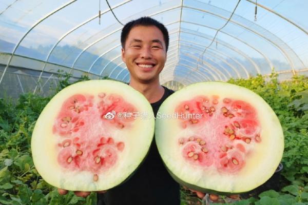 100年前顶级西瓜品种国内试种成功:重达30斤,猪都不吃