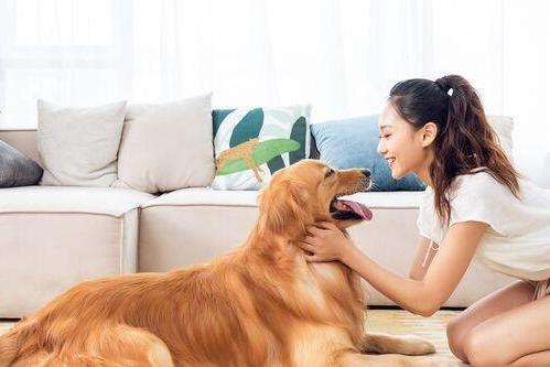 """狗狗会静静躺下看你""""演戏"""" 分辨出人类有意、无意的行为"""