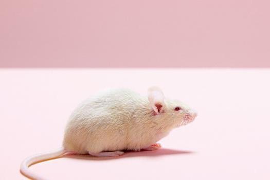 新光珠显微镜技术:科学家首次在小鼠大脑内同步追踪100万个神经元