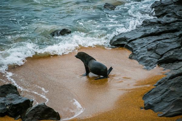 数百只海豹因被渔网缠住受伤甚至死亡,保护组织呼吁对海洋垃圾进行处置