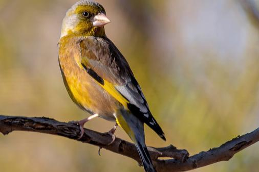 团结力量大!研究:团队合作使鸟类成功应对不可预测的环境